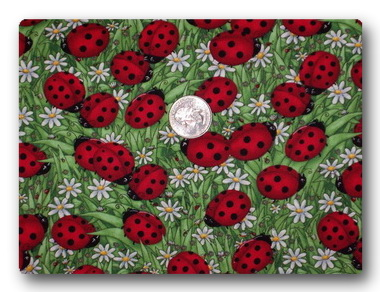 Ladybugs and Daisies-