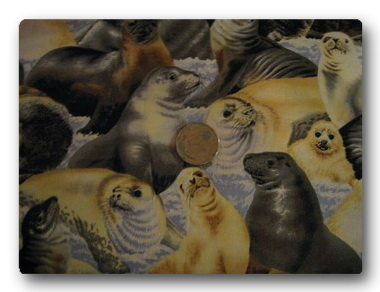 Seals on Ice-