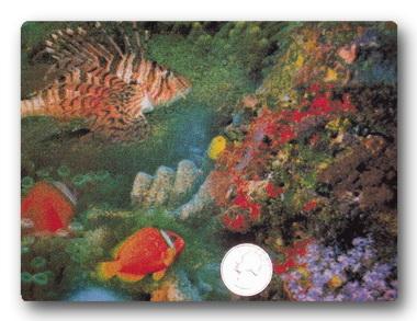 Fish - Photo Fish-