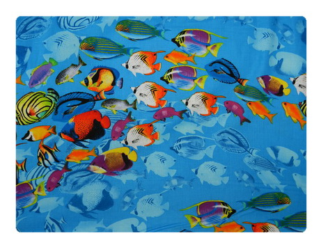 Reef Fish-