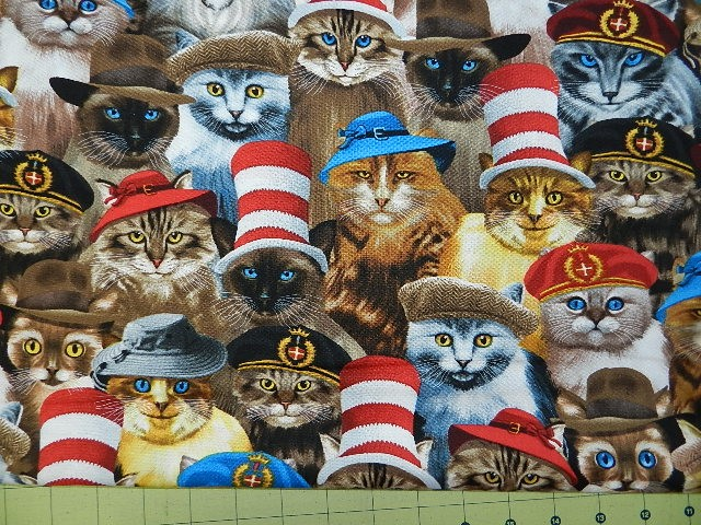 Cats in Hats-