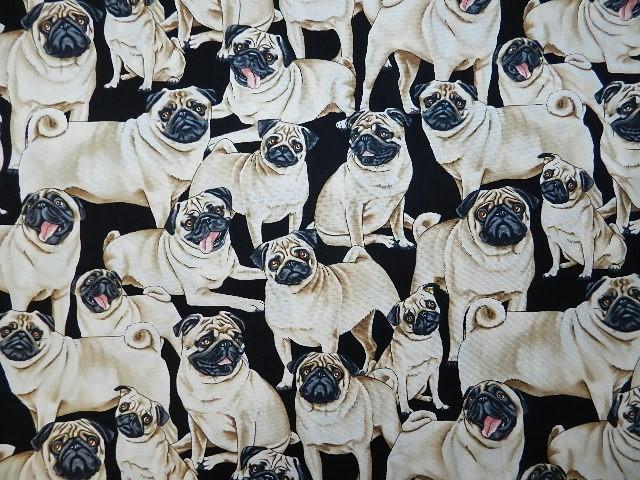 Cute Pugs-
