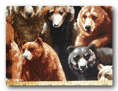 Bears - Bears1-