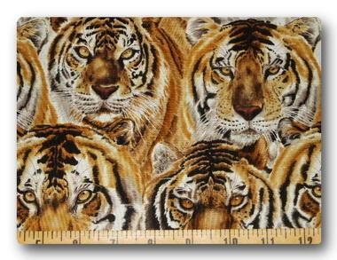 Safari - Eye of the Tiger-