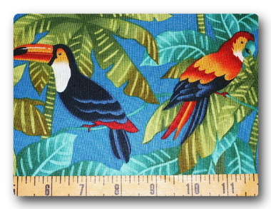Parrot and Toucan-
